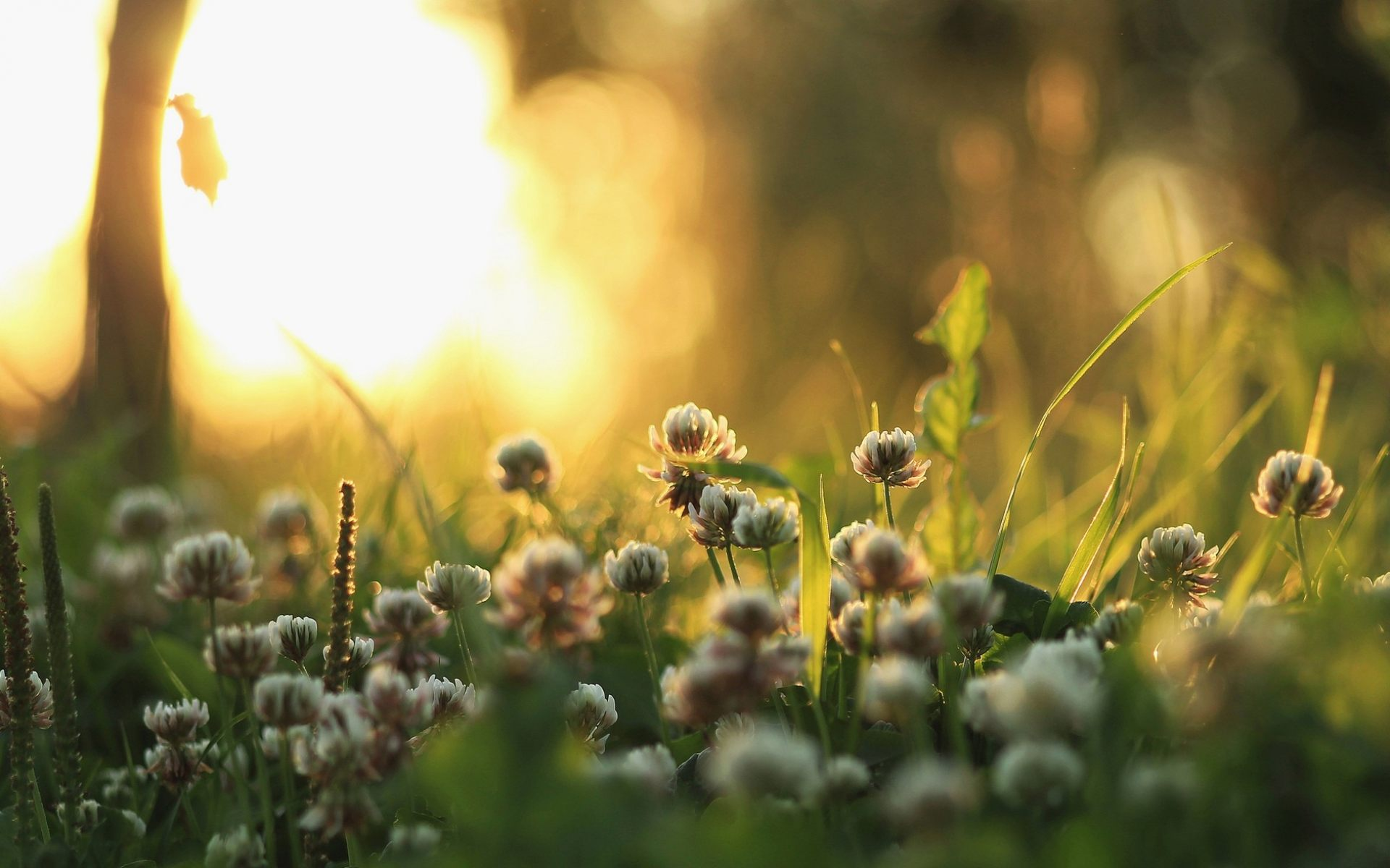 луговые цветы на рассвете