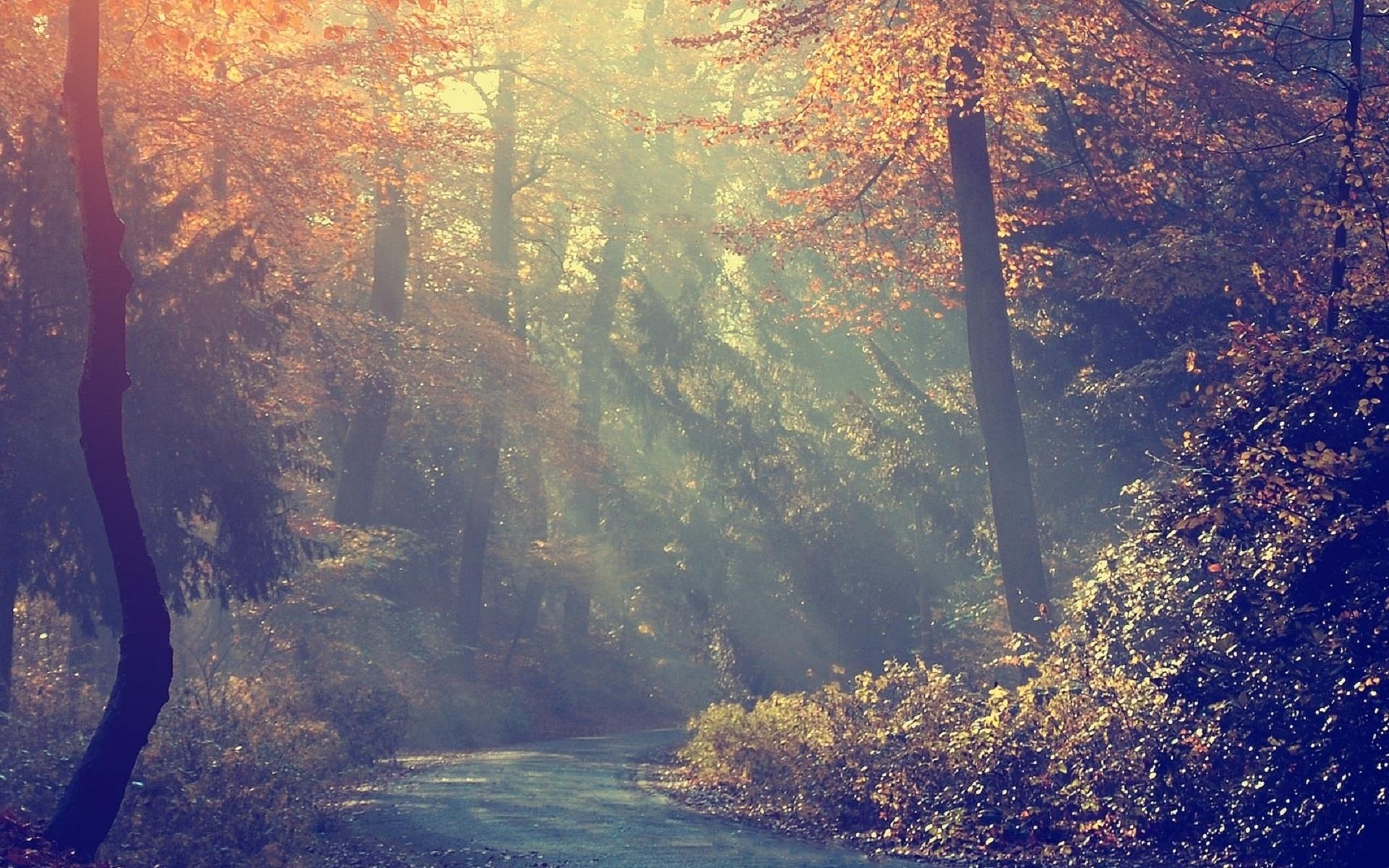 в лесу рассвет