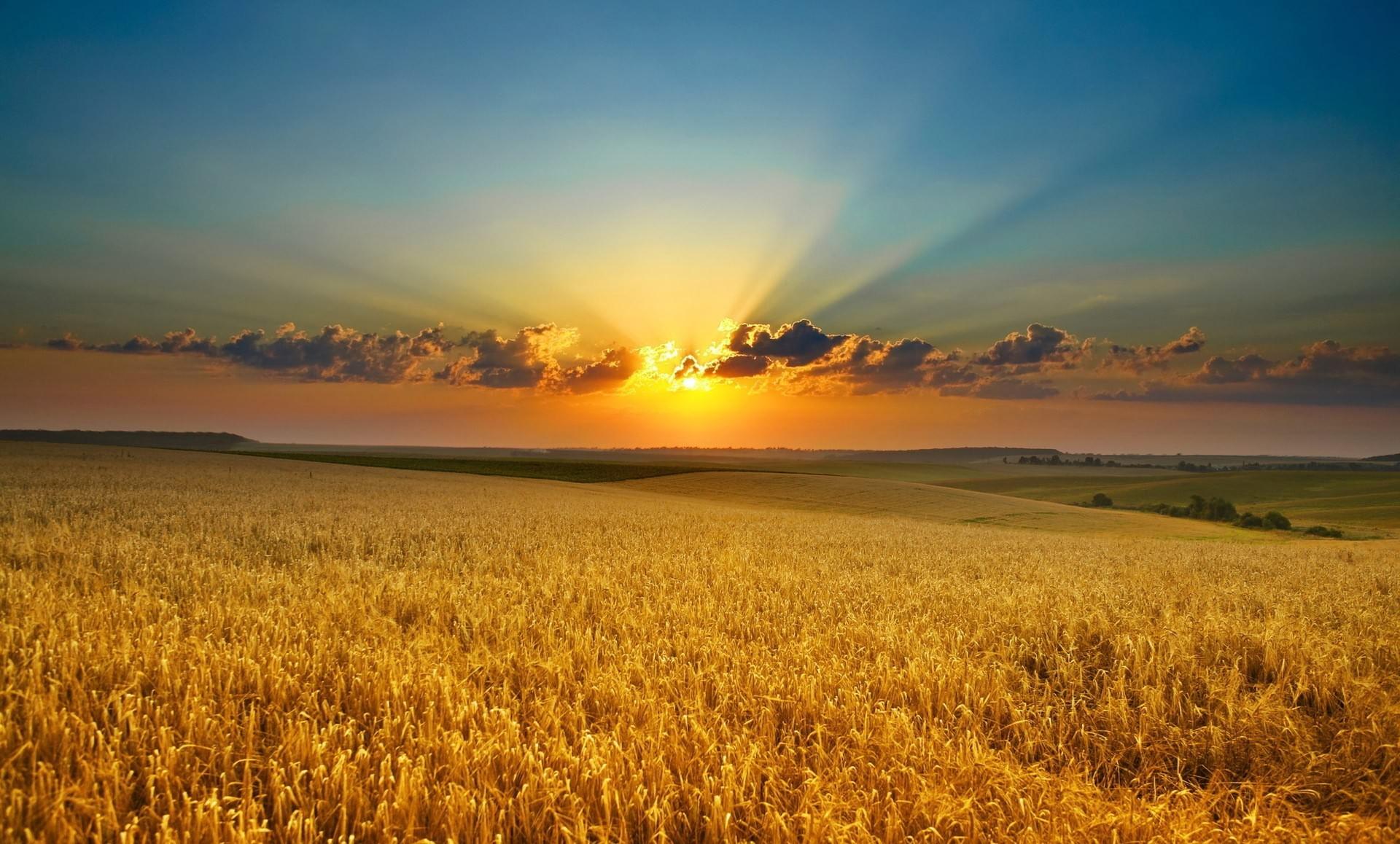 в поле восход солнца