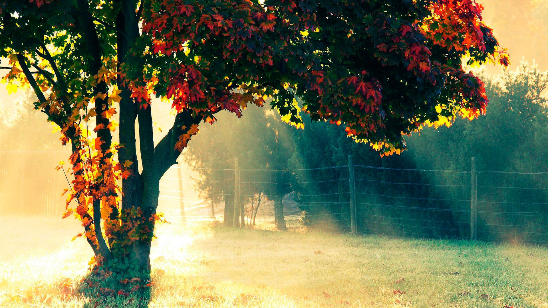 дерево рассвет