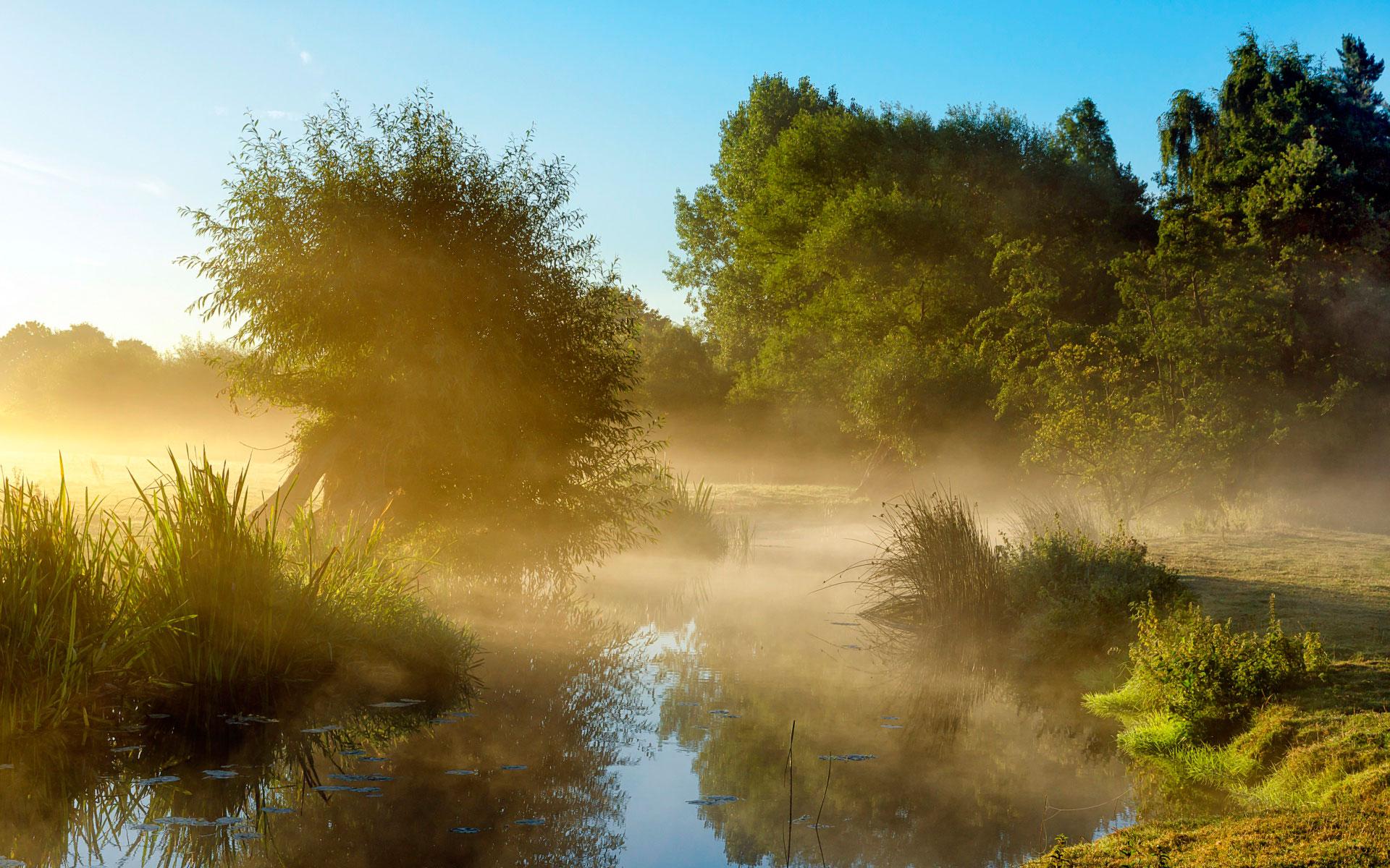 туман утром и солнце