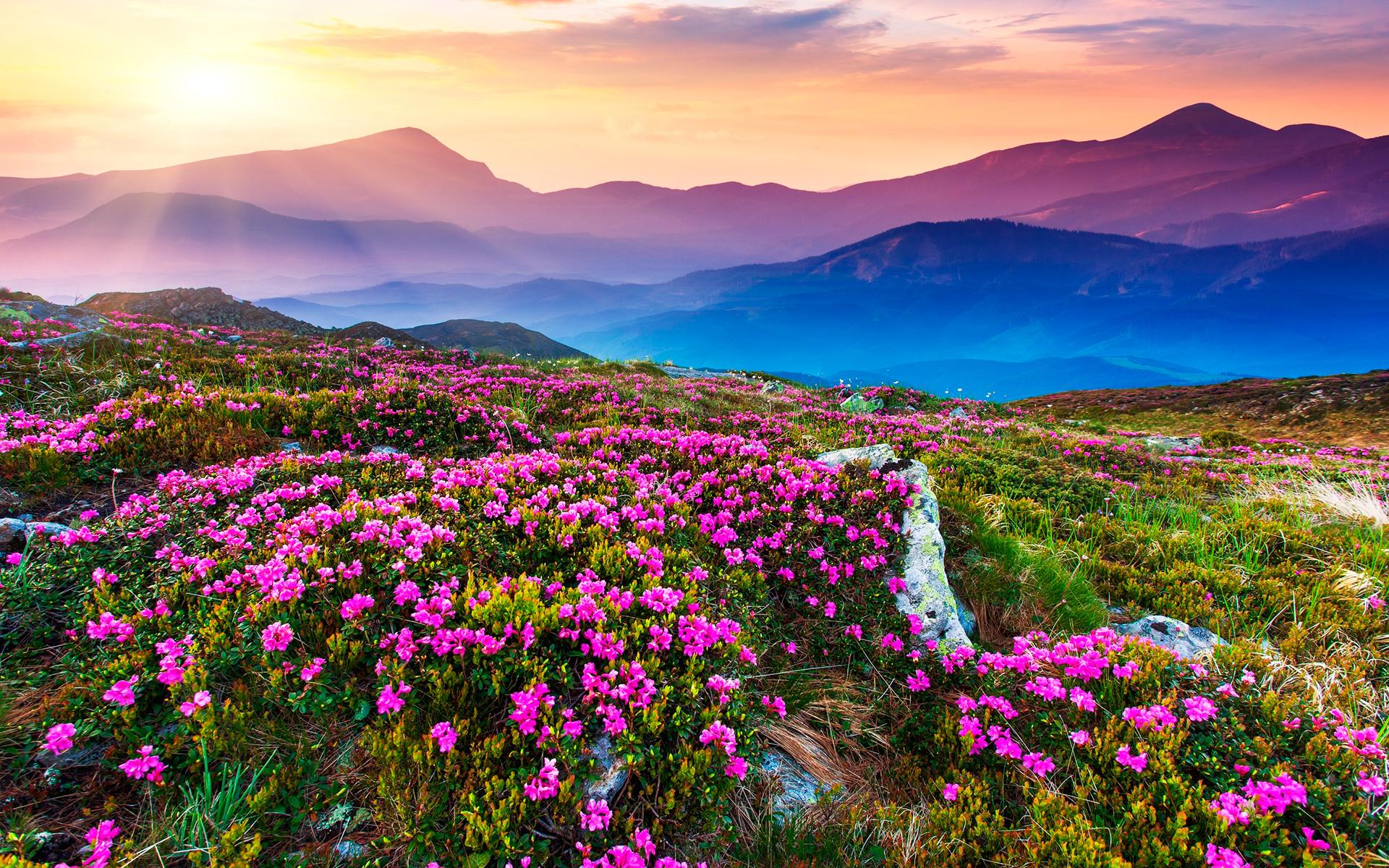 цветы горы