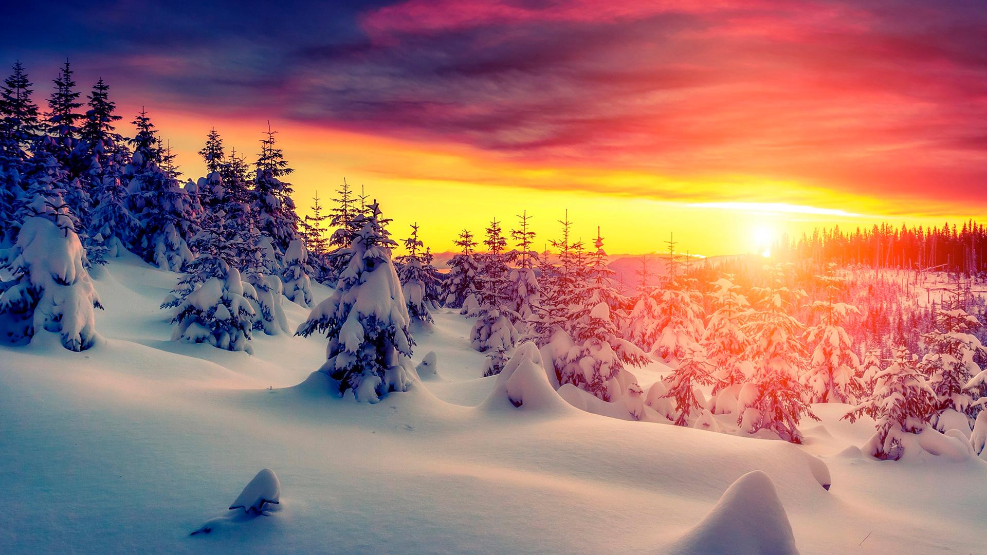 снег и ели