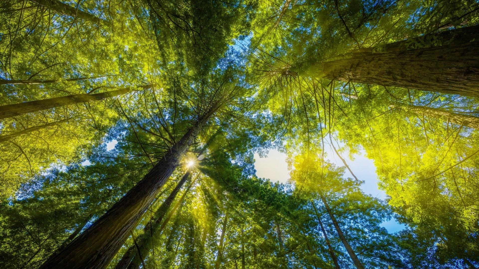 лес лучи солнца