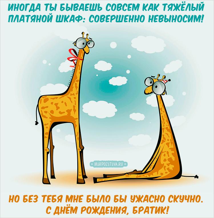 жирафы поздравление брату