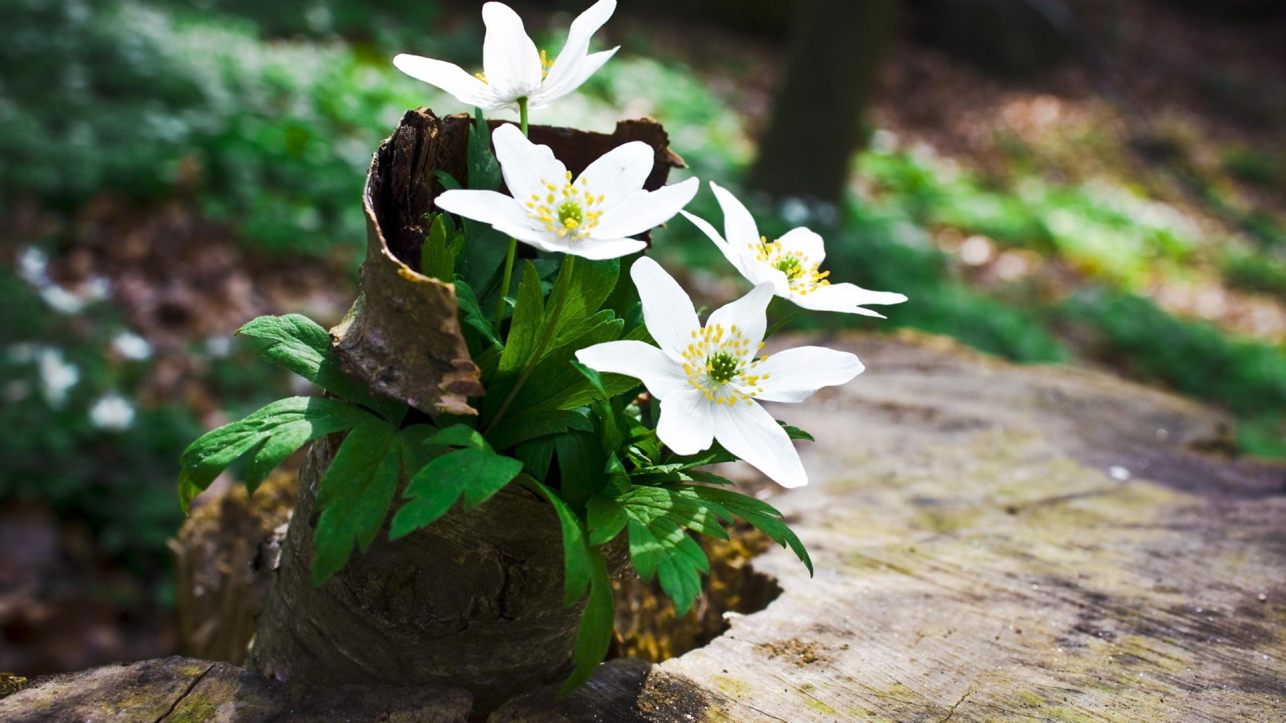 цветы из пенька