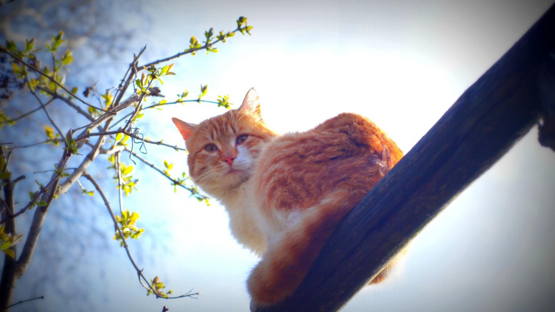 весенний кот природа утро на заборе