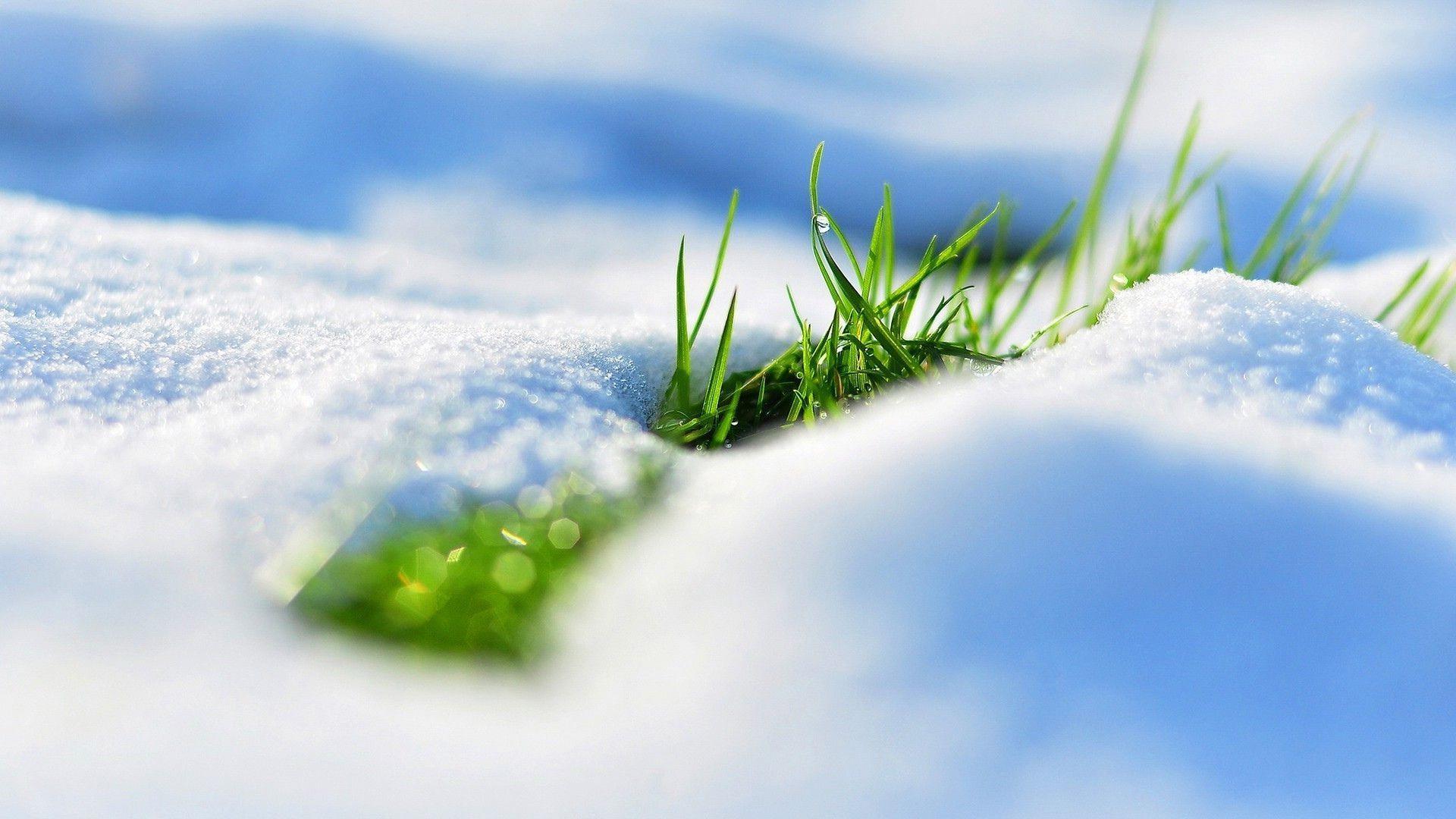 снег трава весна