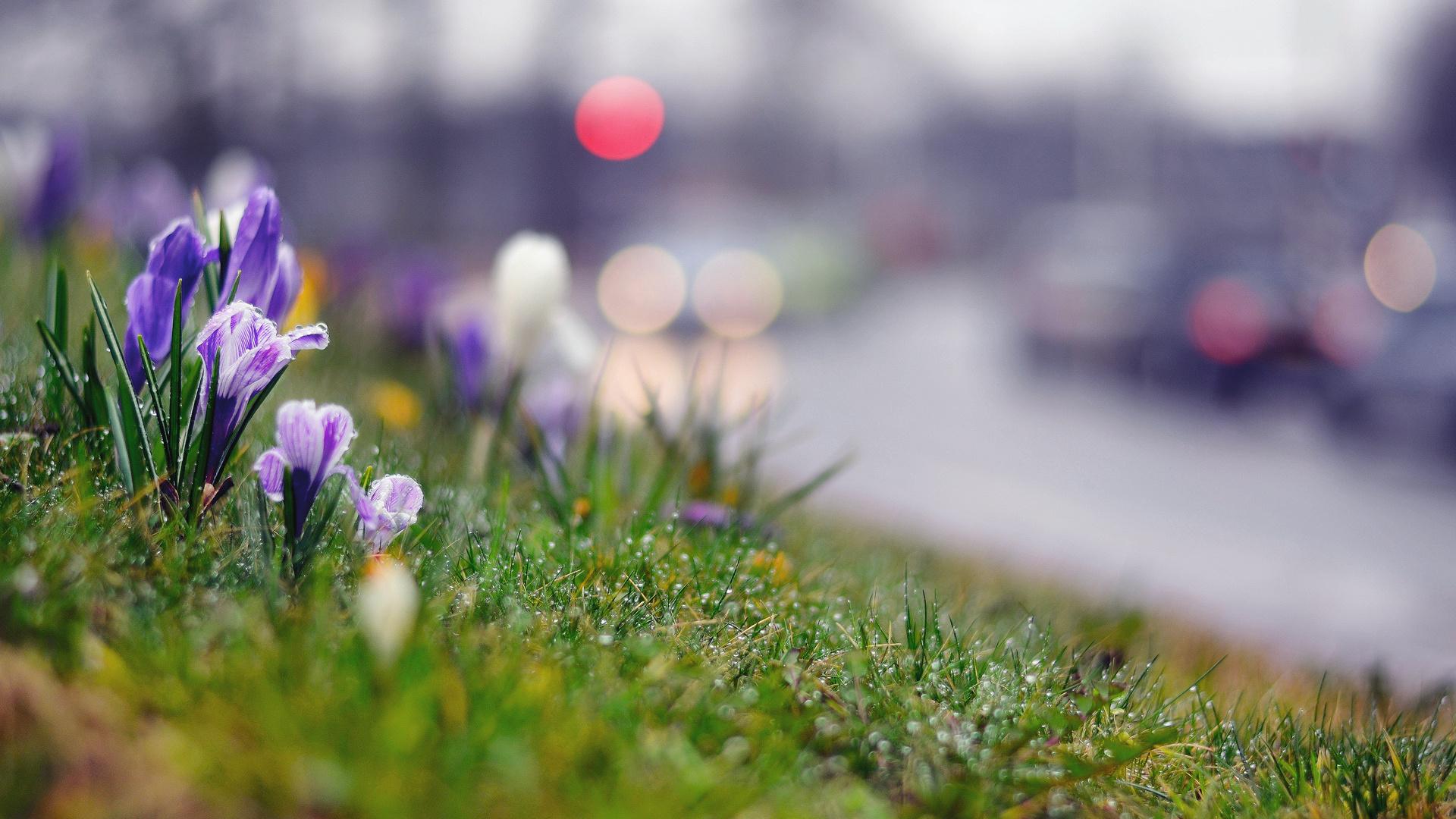 трава первые цветы