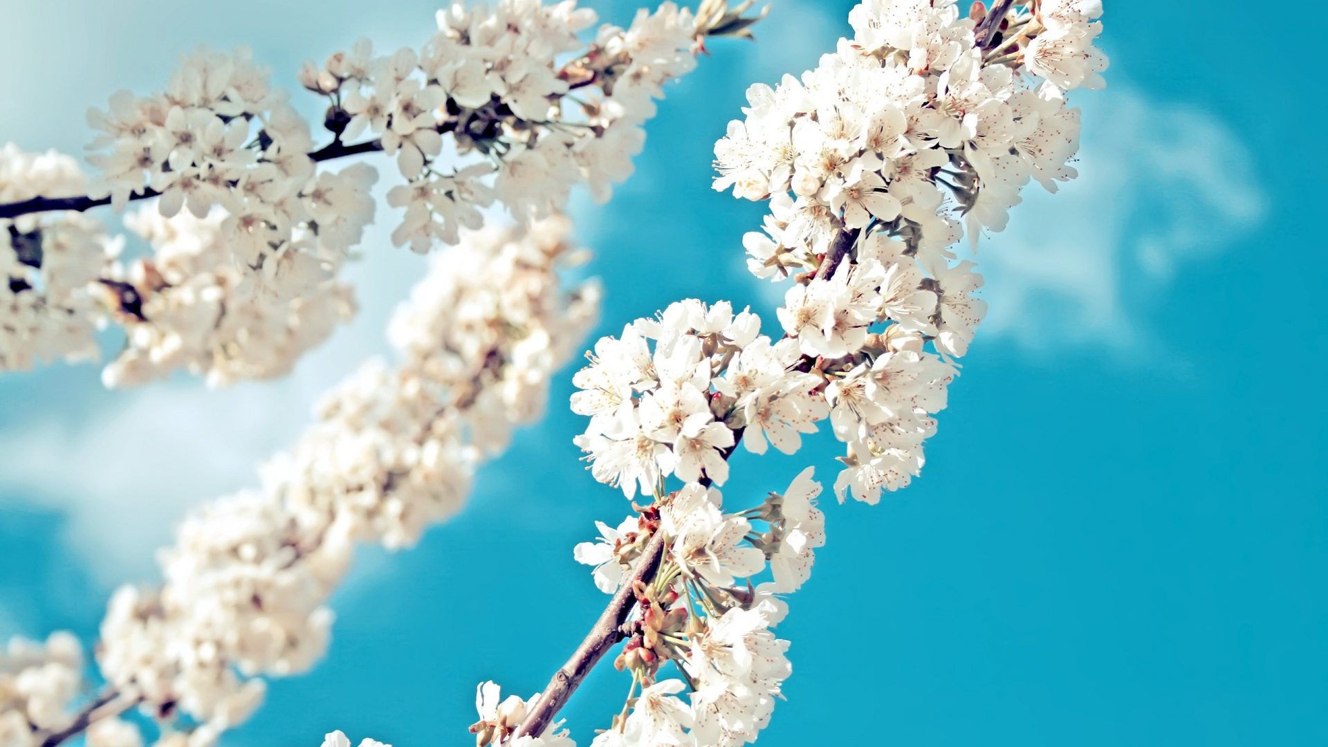 ветка весна цветение