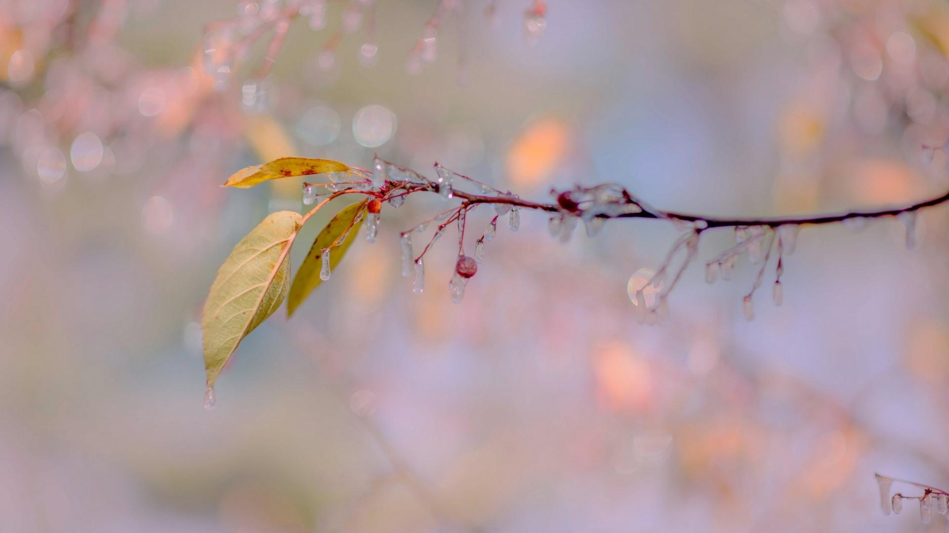 ветка листья плоды сосульки