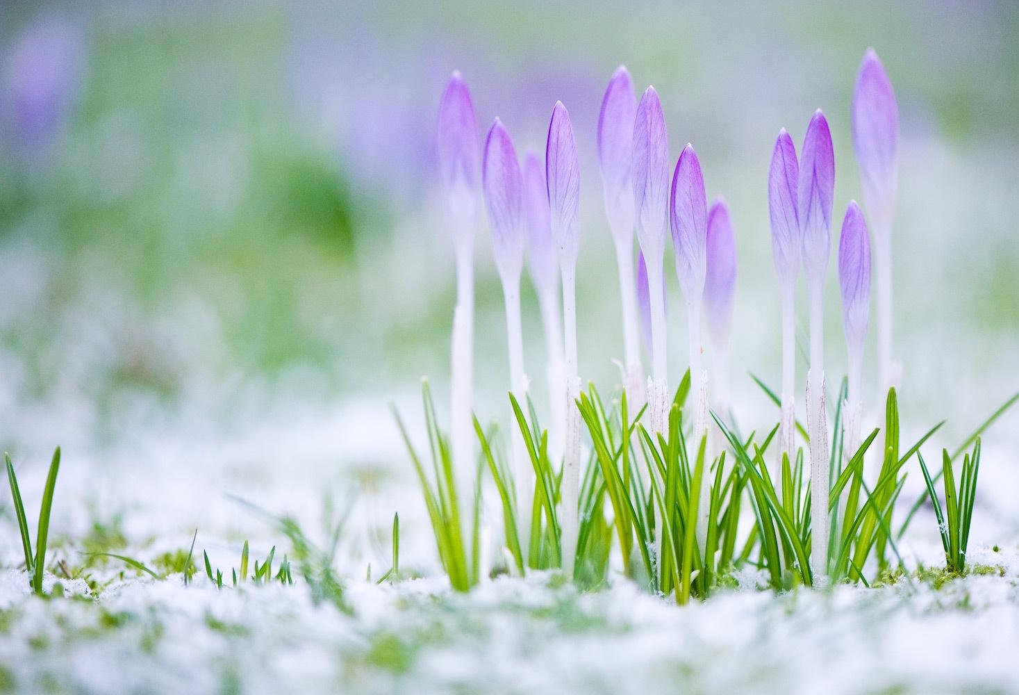 приготовить картинки про весну красивые для презентации устройство