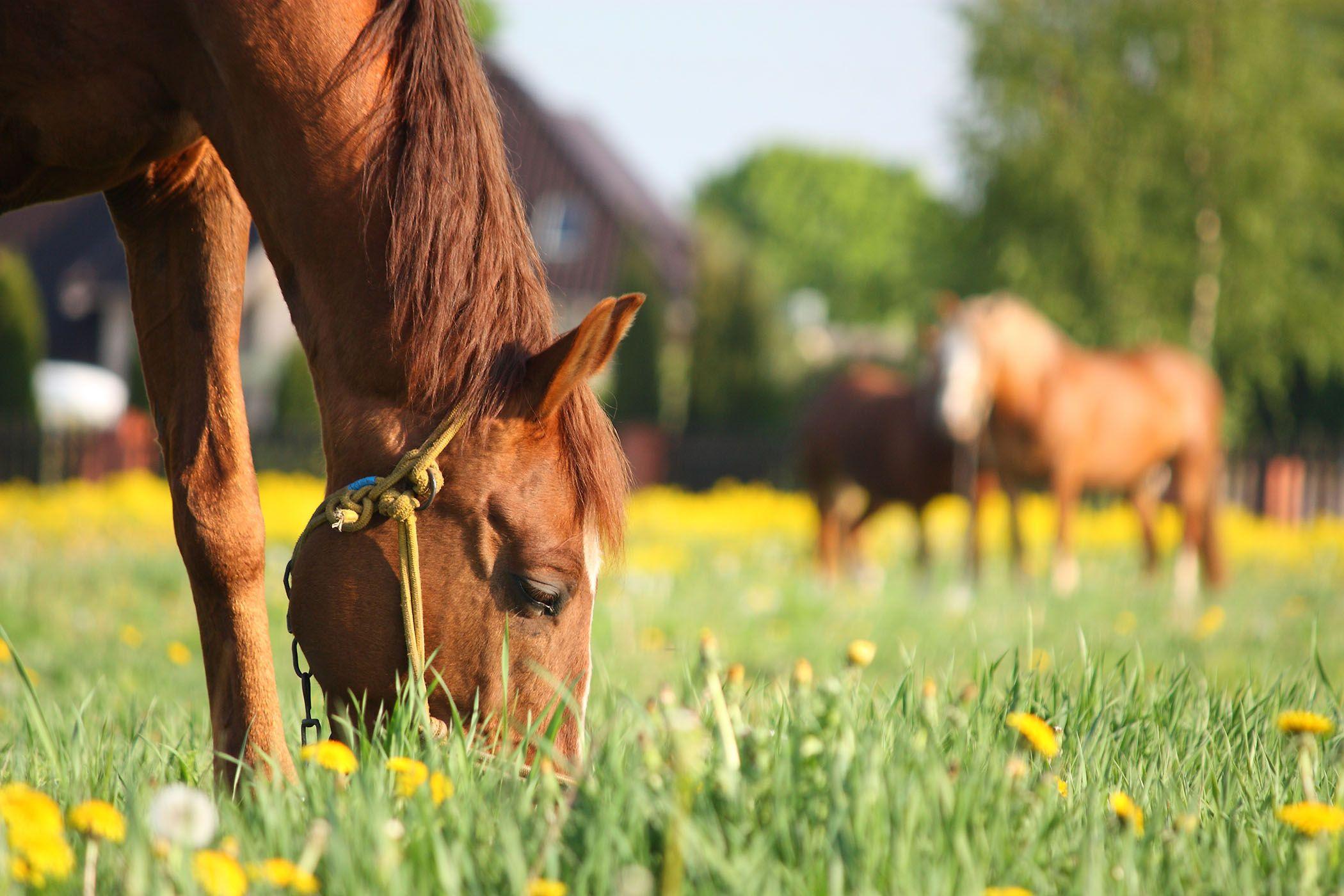 лошадь и пони