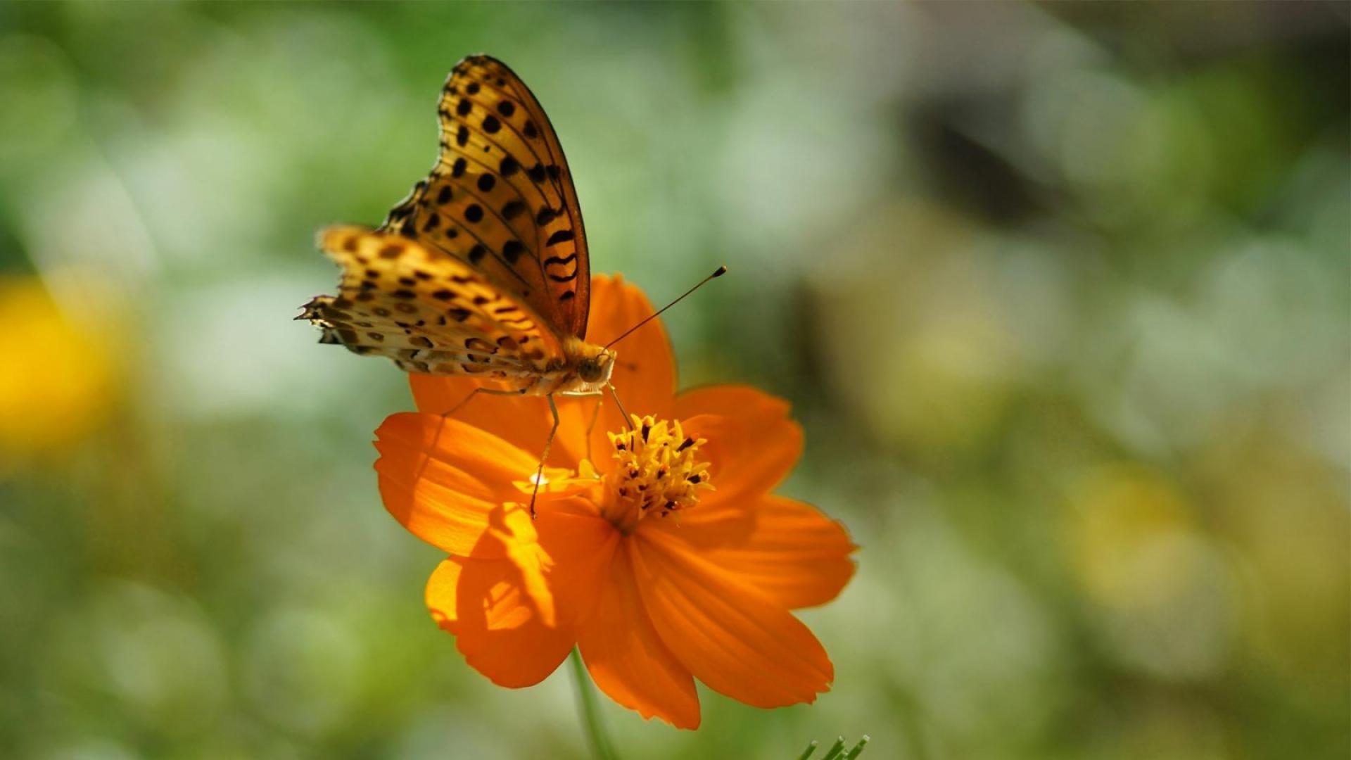 цветок бабочка лето