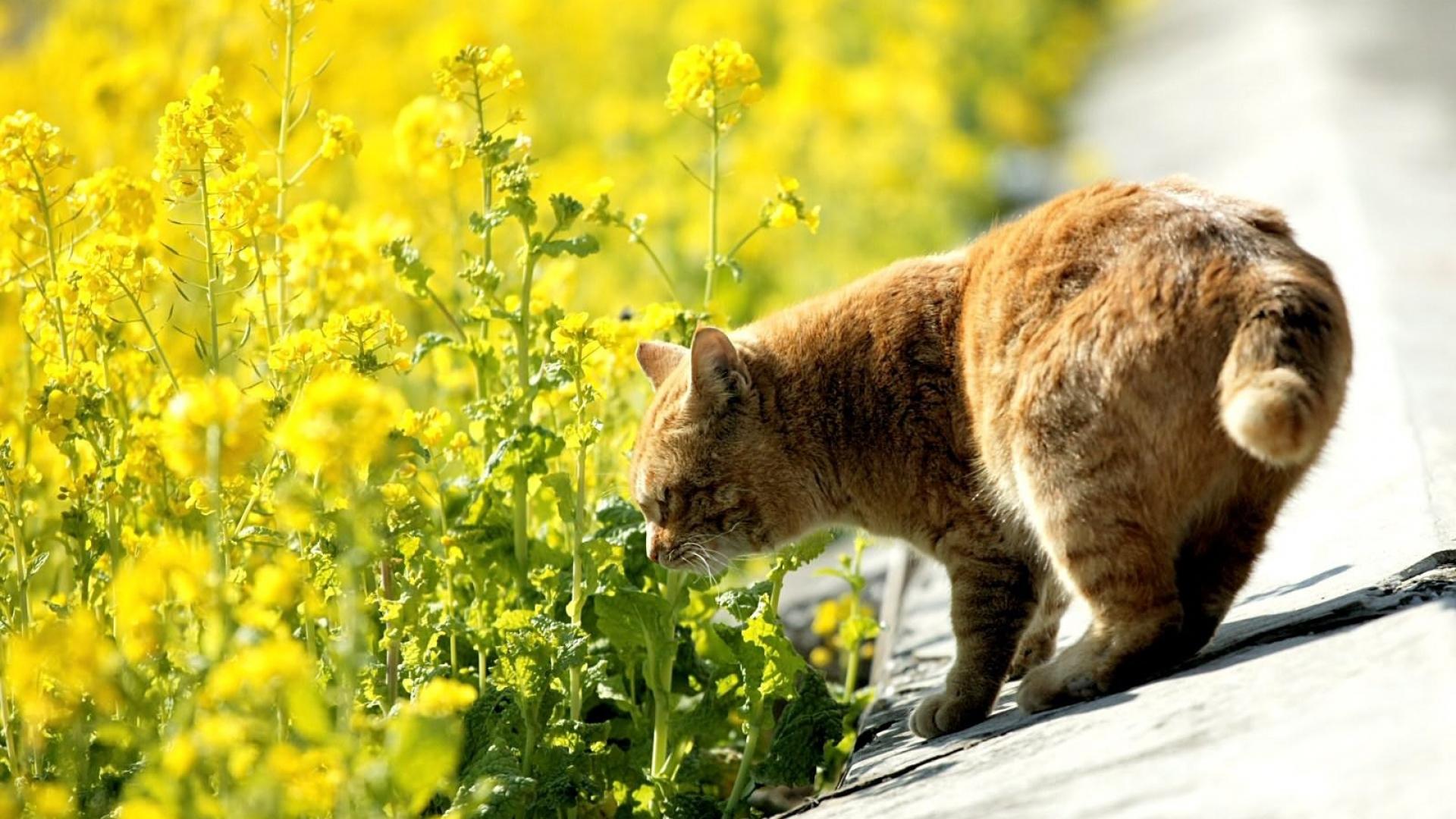 кот нюхает траву летом