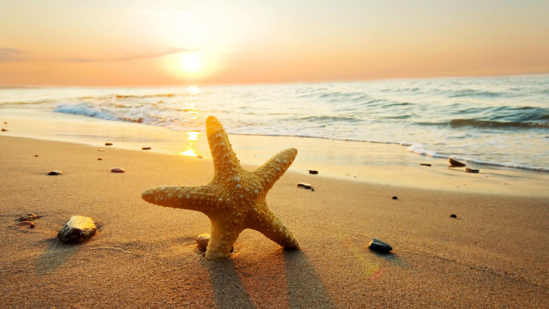 море звезда морская