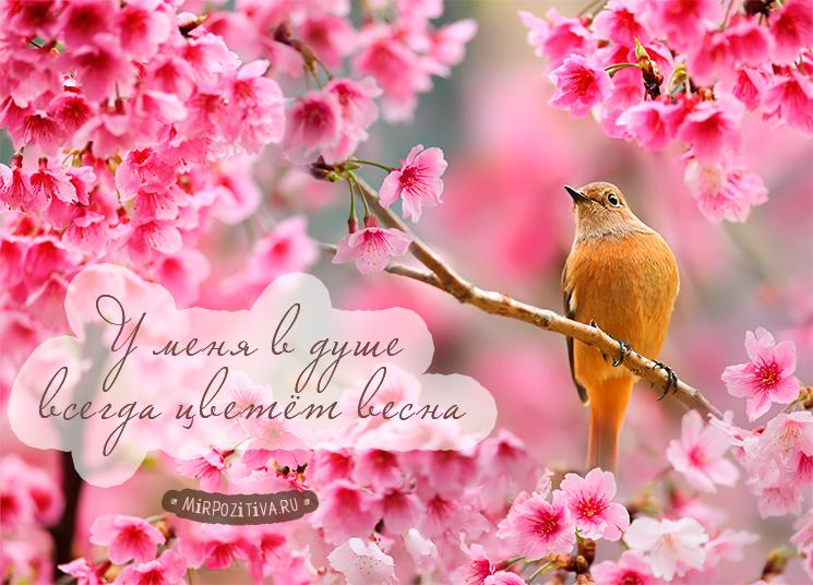 У меня в душе всегда цветёт весна: птичка на цветущей ветке