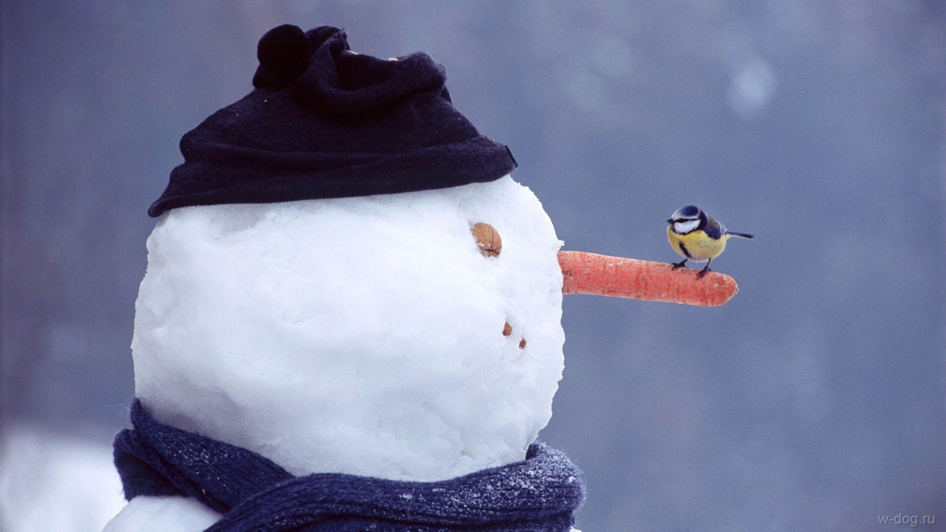 птичка села на нос снеговика