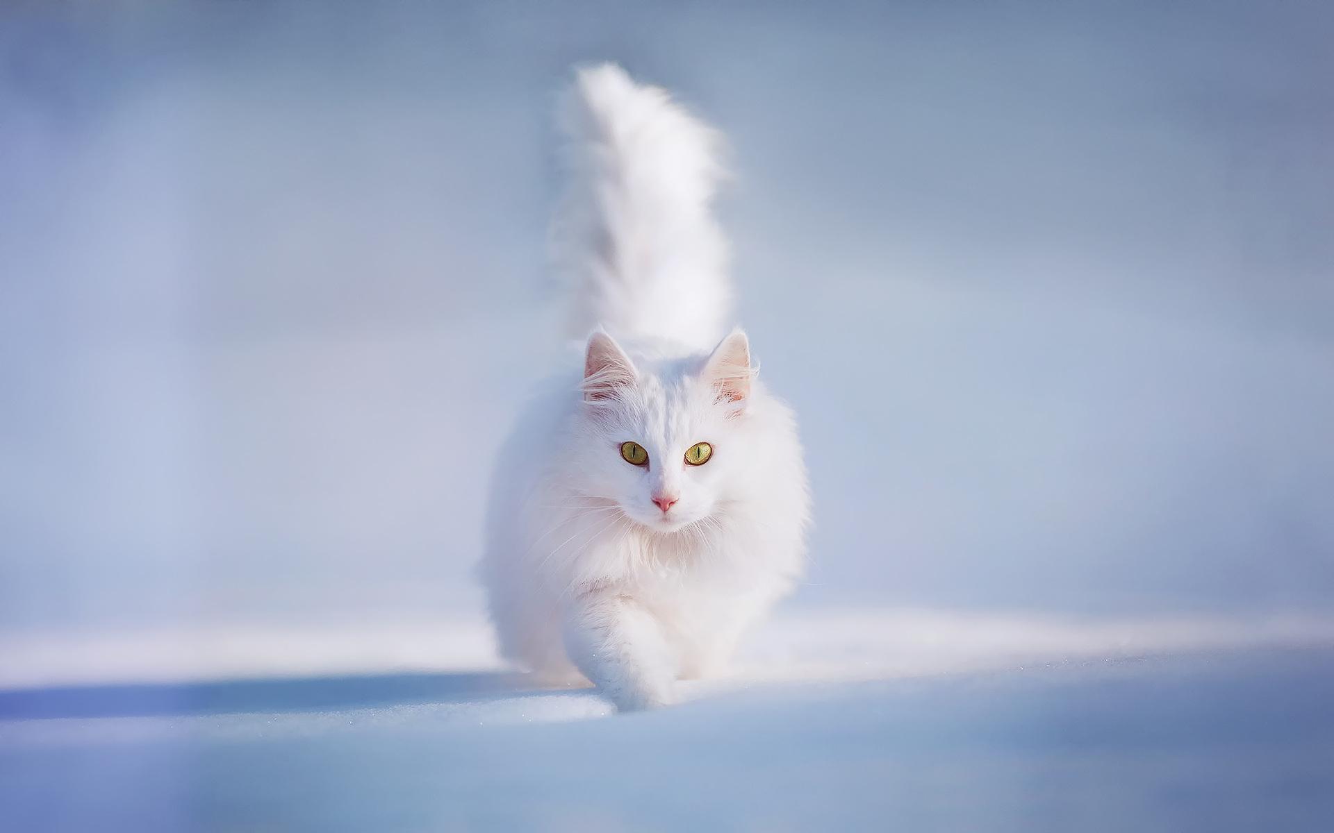 белый кот в снегу