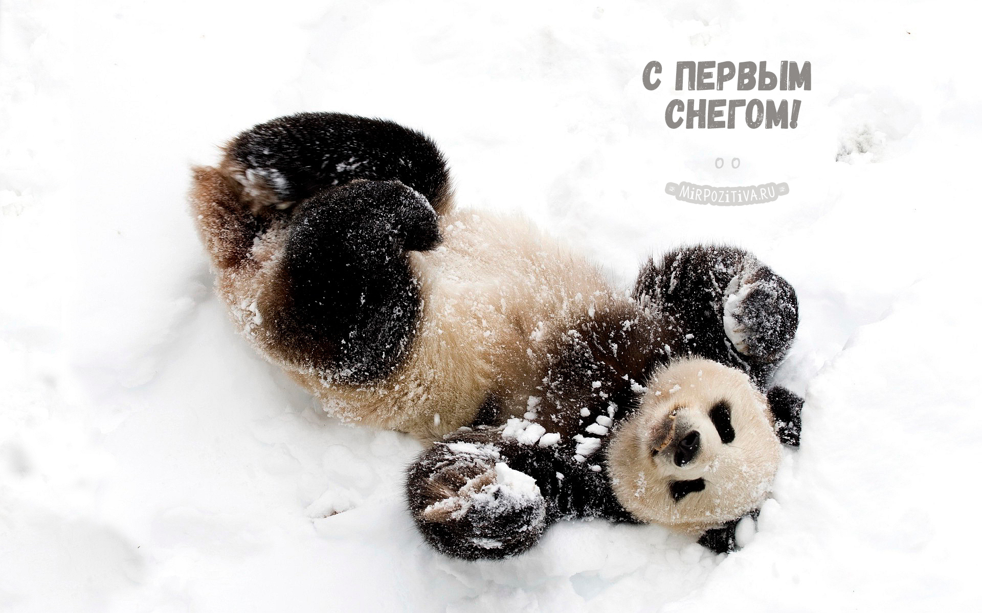 панда зимой