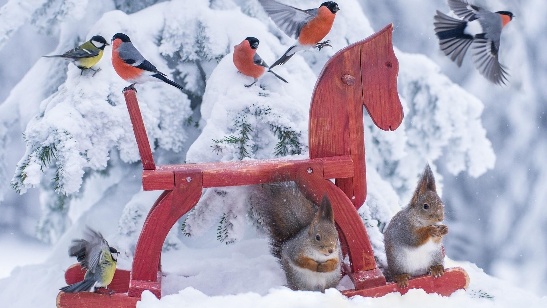 птички белочки зима снег