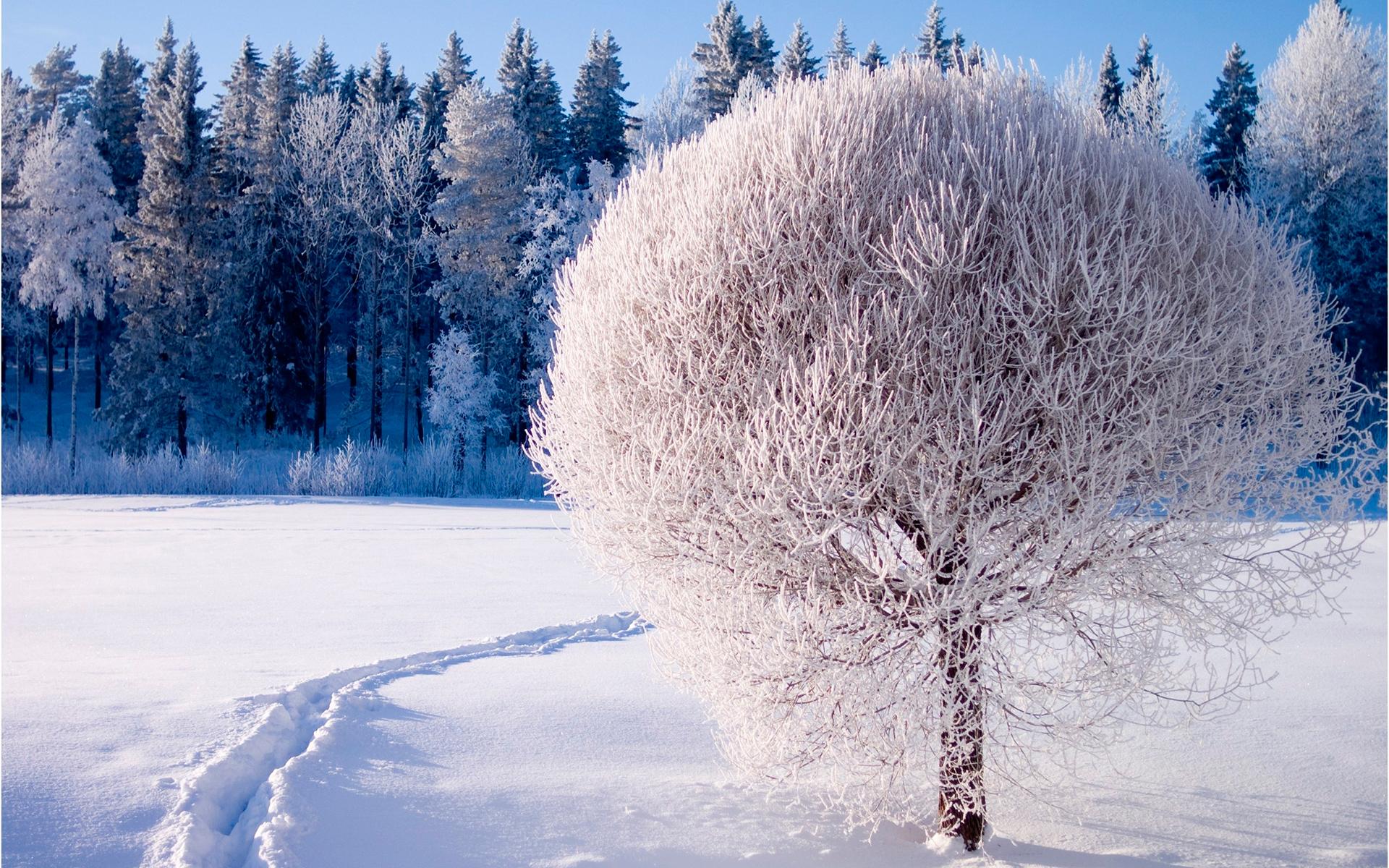 дерево в снегу красиво