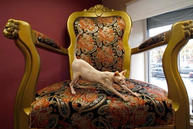сфинкс на кресле