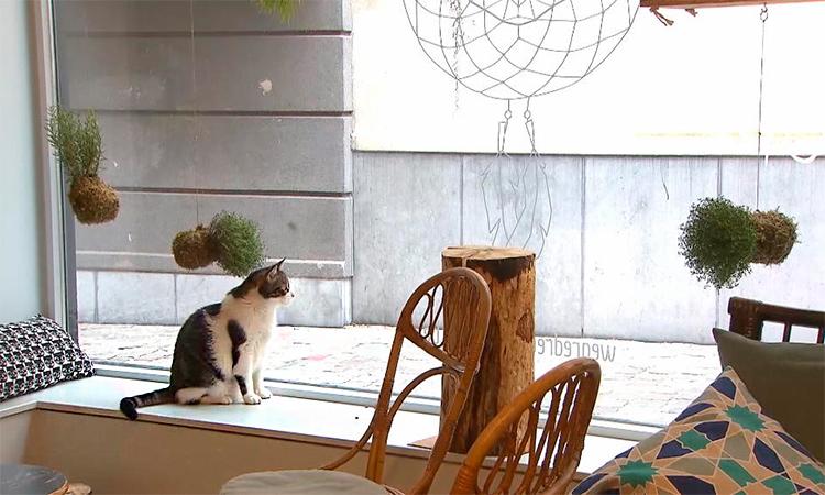 кот на витрине
