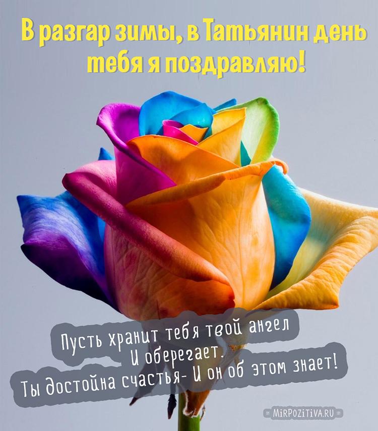 с Татьяниным днем роза