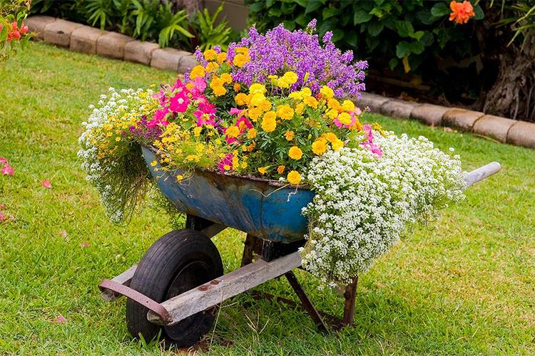 цветы на телеге