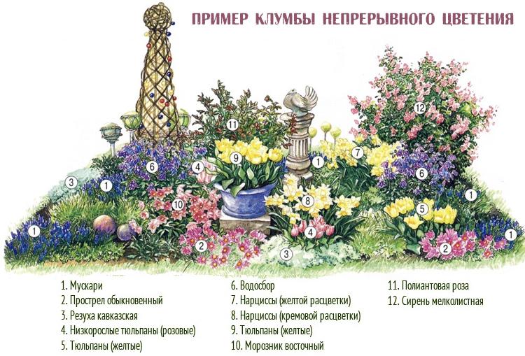 схема непрерывного цветения