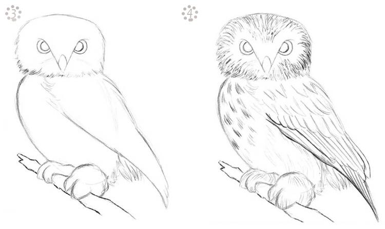 схема рисования сов