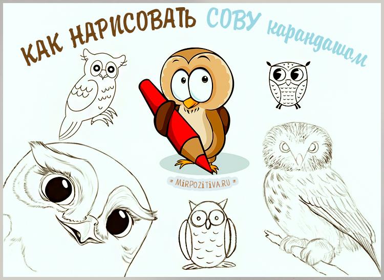 много рисунков сов