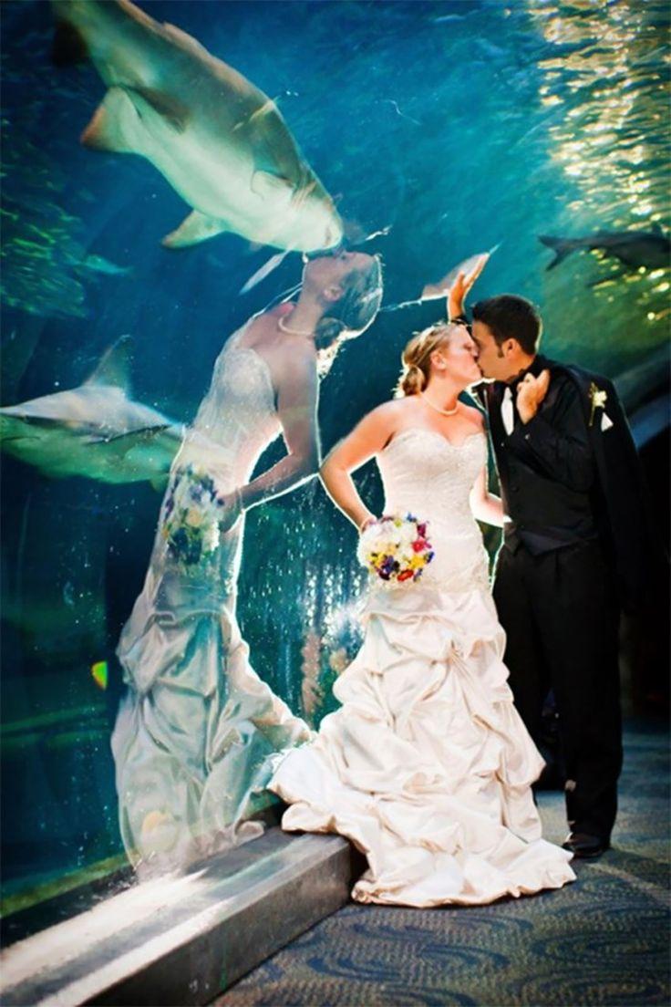 невеста и акула