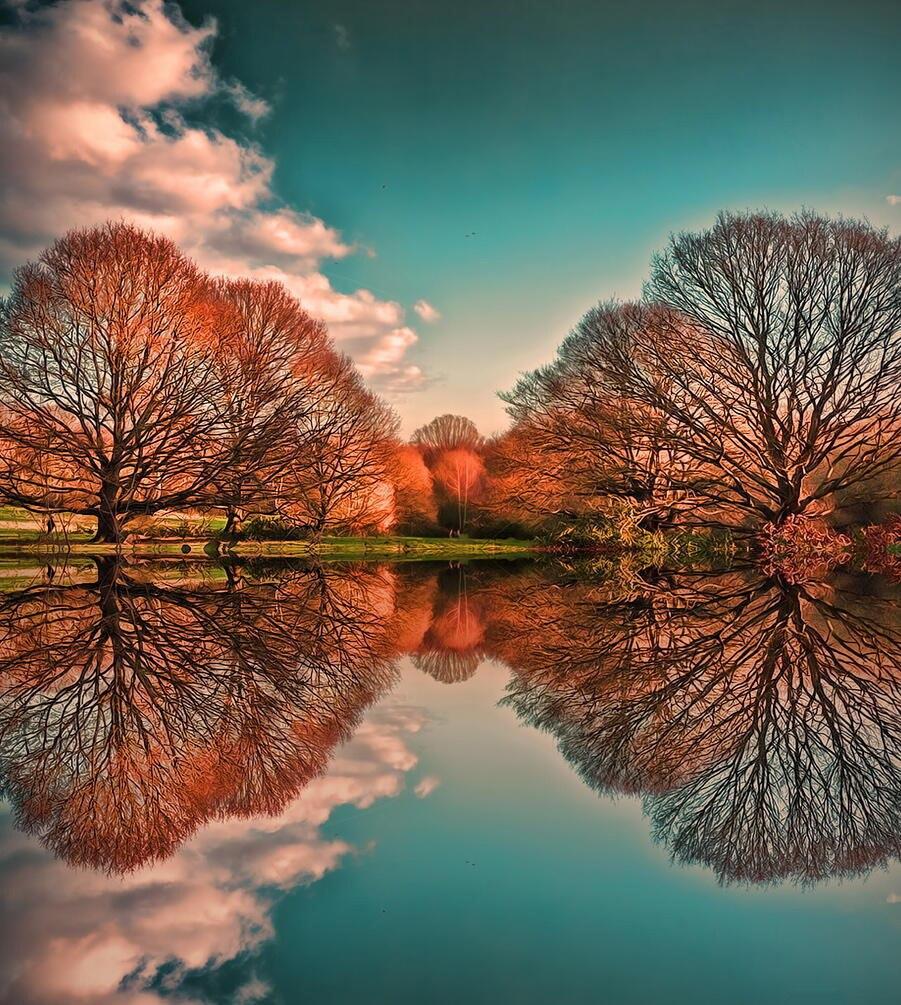 отражение деревьев в воде