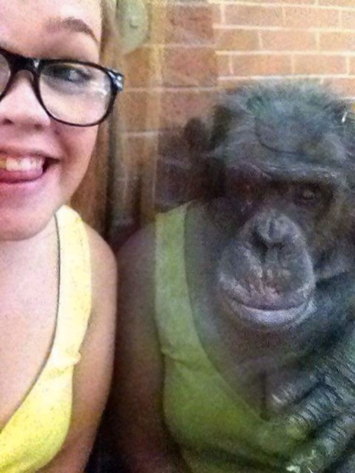 обезьяна в отражении