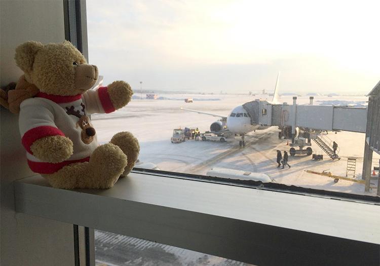 мишка на окне в аэропорту