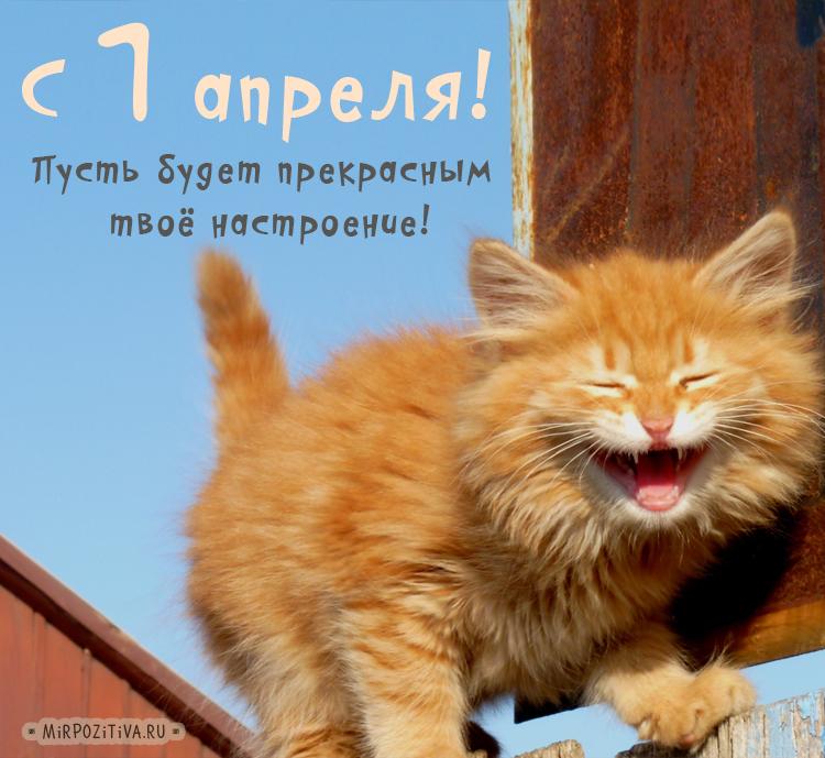 кот смеется 1 апреля