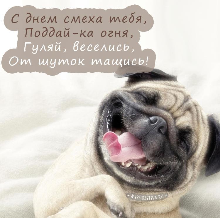 Привет доброе утро картинки прикольные смешные с надписью с мопсами очень силён
