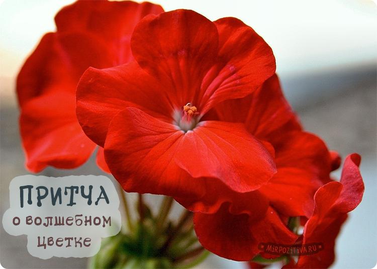 алый цветок