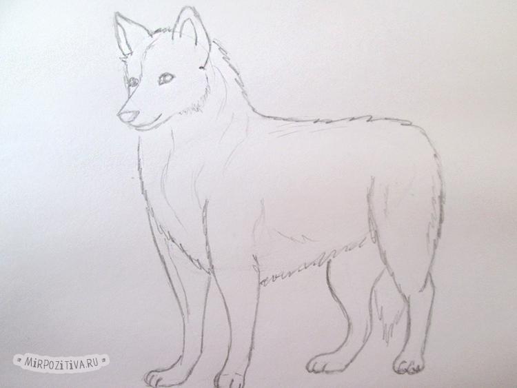 волк почти готов
