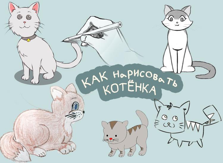 котят рисуем