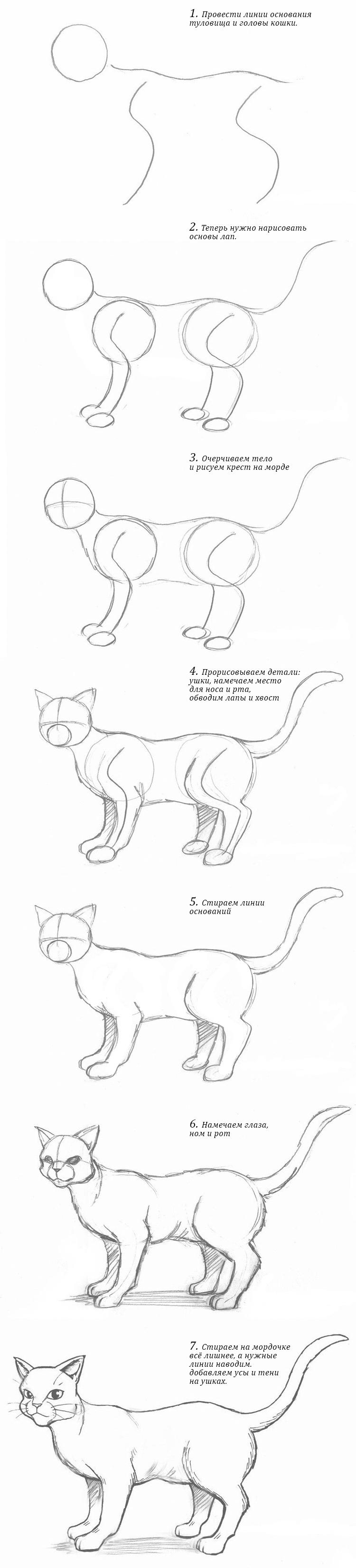 кошка пошагово