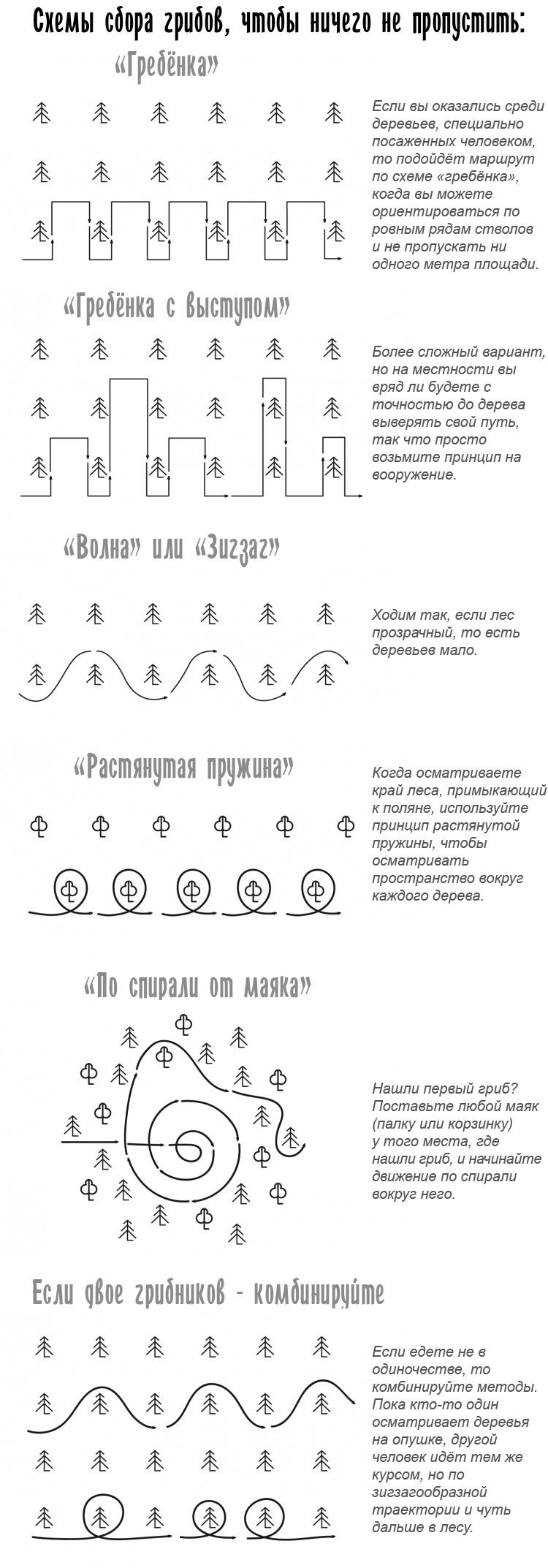 схема сбора грибов