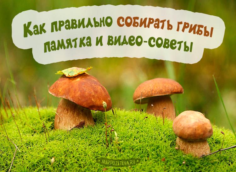К чему снятся грибы - значение сна грибы по соннику