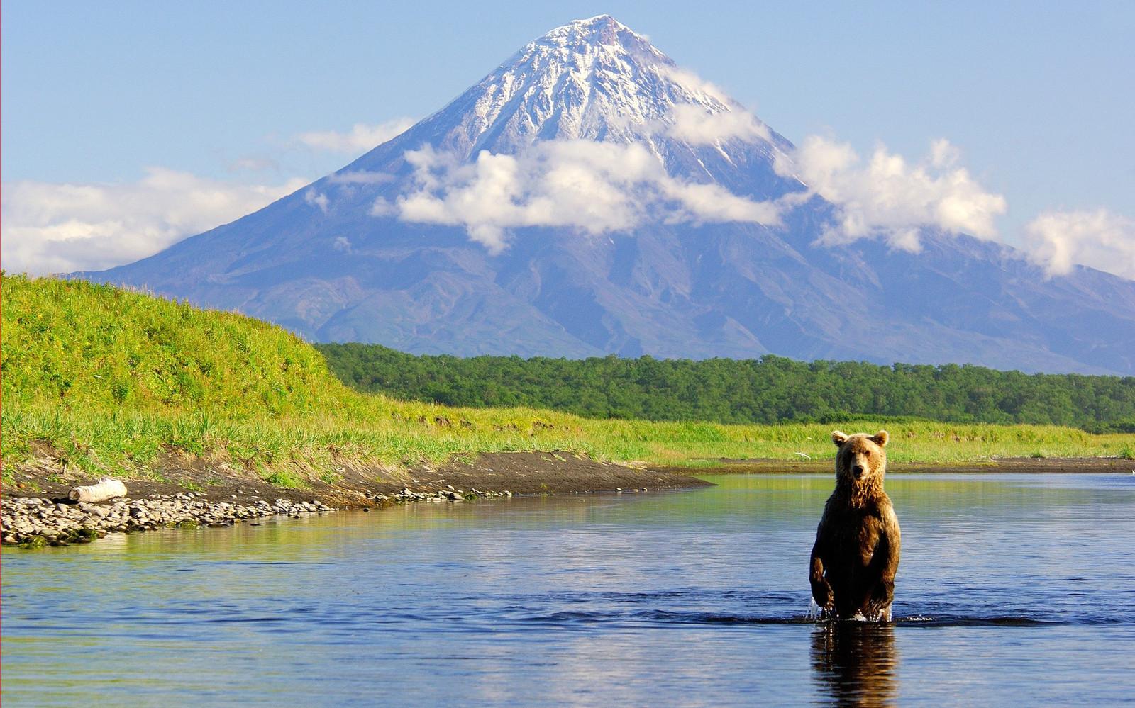 медведь и Кроноцкое озеро