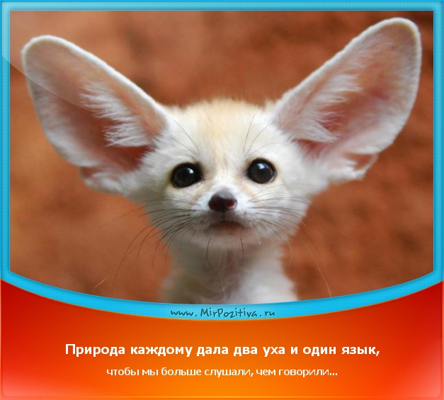 позитивчик дня: Природа каждому дала два уха и один язык, чтобы мы больше слушали, чем говорили...
