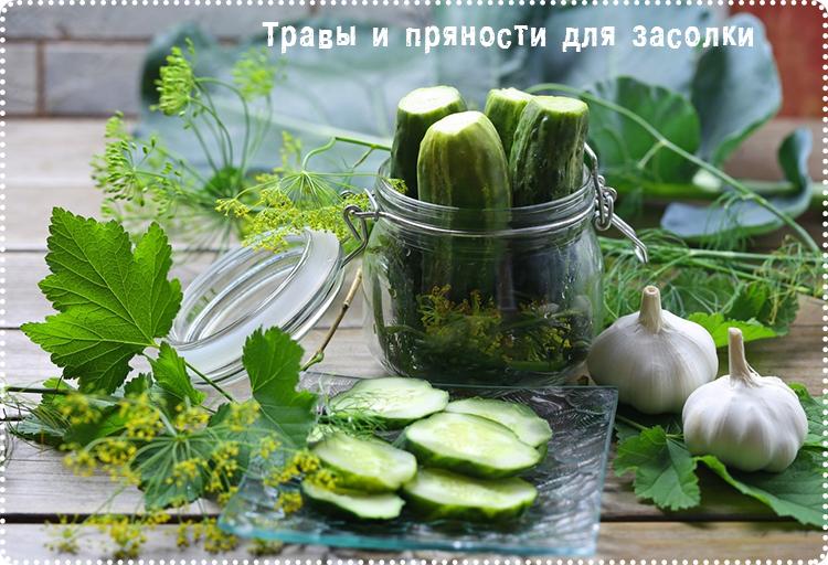 травы и пряности для соления
