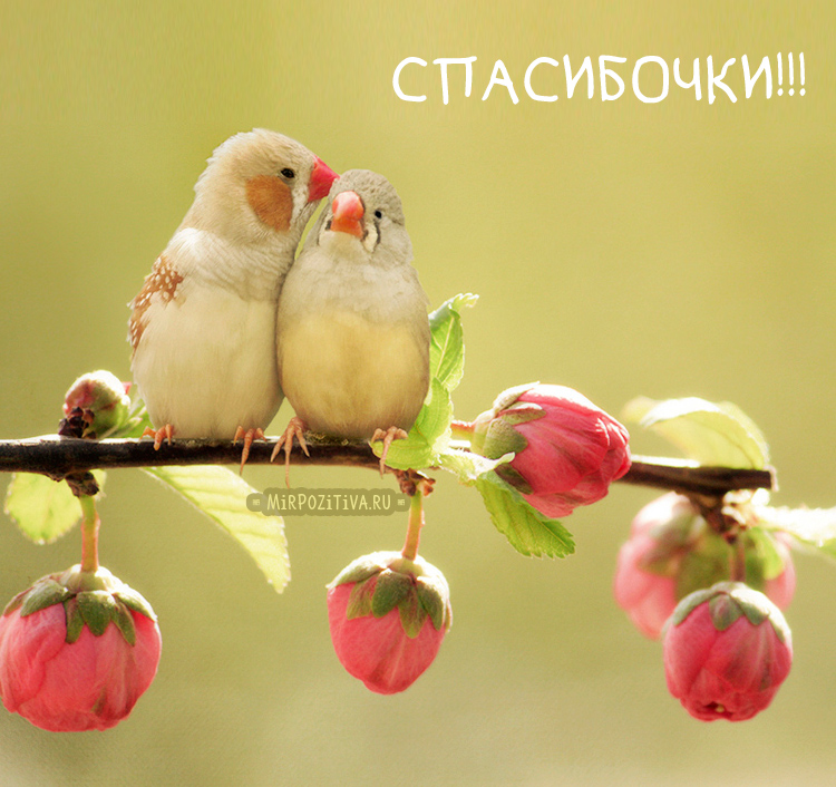 Спасибочки! два попугайчика