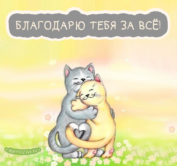за всё! котики обнимаются